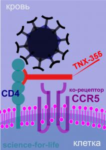 HIV TNX-355